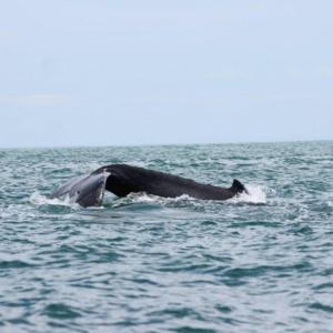 Avistamiento de Ballenas y Delfines