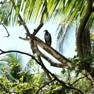 Parque Nacional Corcovado Día